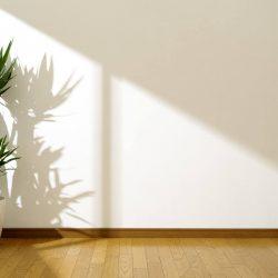 pflanzen-die-kaum-licht-brauchen